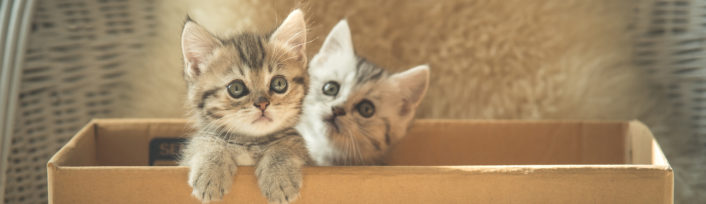 Two tabby kittens in a box